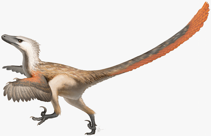Velociraptor realistic concept by Fred Wierum